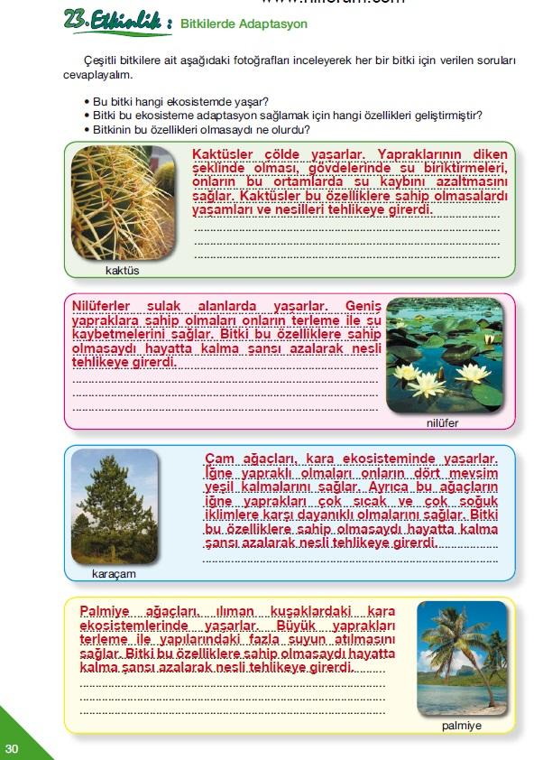 Teknoloji çalışma kitabı cevapları 2012 fen ve teknoloji